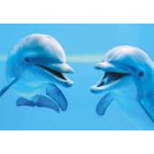 Clementoni - Animals - Dolphins (1000)